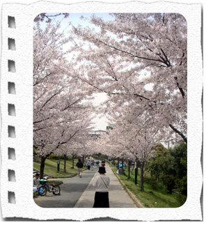 Sakura1web