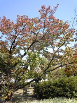♪小さい秋♪